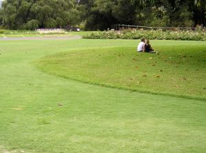 Turf Aprons at Sydney Gardens