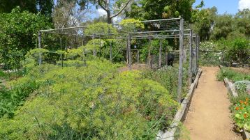 Vegetable Garden, Kyneton, Barcaldine