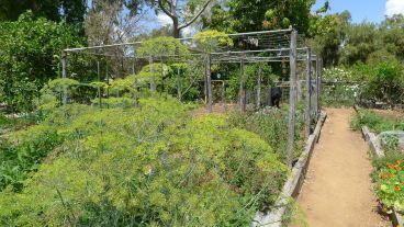 Vegetable Garden, Kyneton, Barcaldine