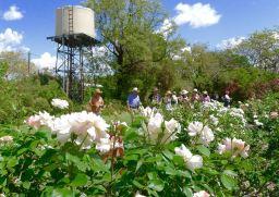 Kyneton Rose Garden, Barcaldine