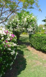 Heather's romantic cottage garden, Barcaldine