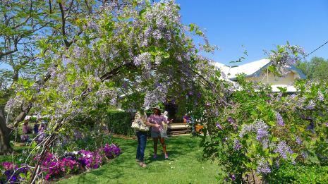 Heather's romantic cottage garden