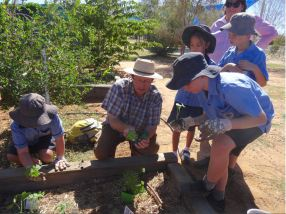 Jerry helps St Joseph, Barcaldine, plant vegies