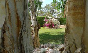 Kyneton: Best Rural Garden, Barcaldine