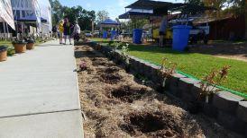 new shrub border for The Globe, Barcaldine