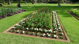 Tulips finished a fortnight before the Carnival of Flowers