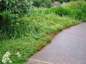 Good choice: Acalypha 'Summer Love' at Roma Street Parkland