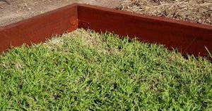 Mowing strips to control spread of rhizomatous plants