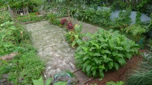 Sustainable Lawn treated with dolomite at Bellis