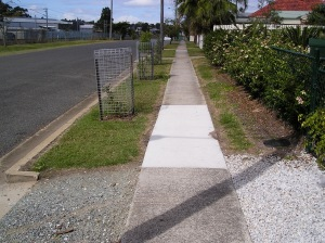 Bellis nature strip in transition: council donated tree cages in place