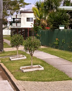 Tree pit - ideal for contained planting, Wynnum