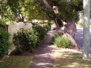 Nature strip planting using Lomandra and Hibiscus, Brisbane