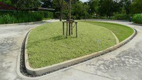 Buffalo grass, Stenotaphrum secundatum 'Variegatum'