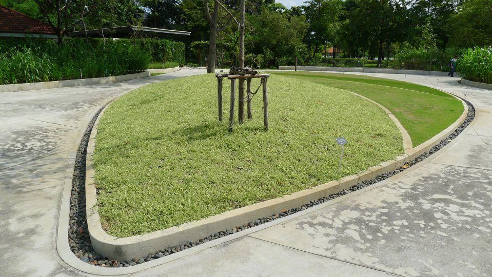 Buffalo grass, Stenotaphrum secundatum 'Variegatum' – 1 ...