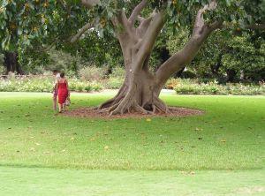 Turf Aprons at Sydney Gardens