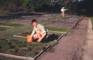 Popular lawn and native grasses on display, Turf Plots, Royal Botanic Gardens, Sydney