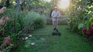 Sustainable turfculture at Bellis: 1 guinea pig per 20 sq metres
