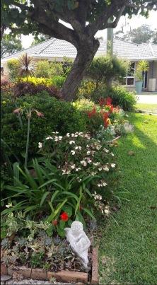 Subtropical exuberance: Debra's free flowing footpath perennial border