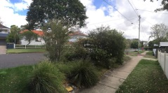 Footpath gardens are great places for growing native plants.