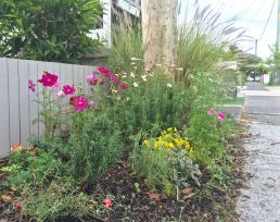 """""""Vandal-proof but pretty"""" - a subtropical cottage verge planted by Paula and her grand daughter."""