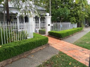 Verge gardens enhance property values. English box completes the picture.
