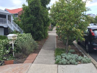 Aromatic plants enliven a walk. Planted for reliable, durable charm.