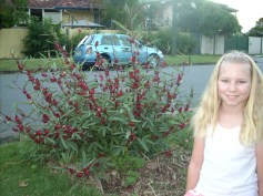 Banned by Brisbane City Council: Susan was forced to turf over her footpath garden
