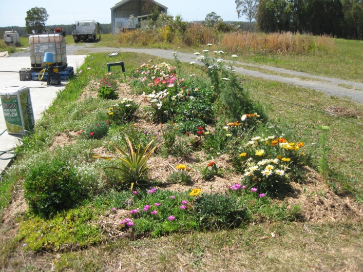 Competition from NSW from Stephen H, a confirmed public gardener