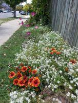 Mr Loveday's footpath garden