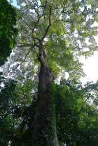 Primary Rainforest, Singapore
