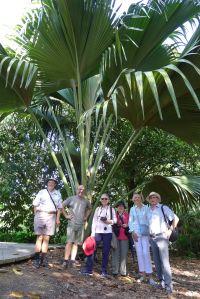 Double Coconut, Lodoicea maldavica