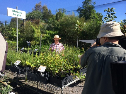 Coolum Native Nursery grows Wallum species