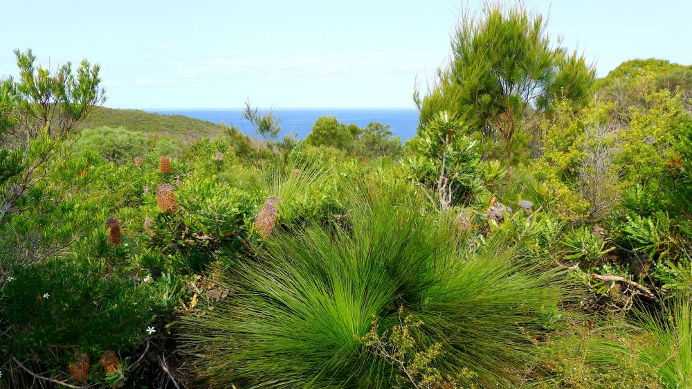 Wallum Heath, Noosa National Park