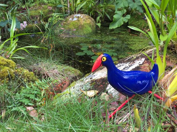 Pukeko, Porphyrio porphyrio, New Zealand