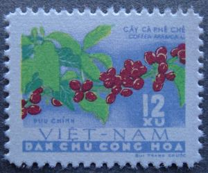 Coffea arabica, North Vietnam, 1962.