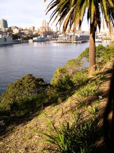 Revegetation of Woolloomooloo Bay in the Yurong Precinct, Sydney, included planting native weeping meadow grass, Microlaena stipoides.