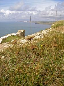 Natural chalk grassland with sea carrots (Daucus carota subsp. gummifer), St Aldhem's Head, England.