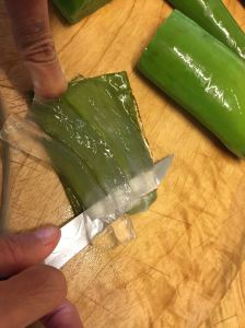 Aloe vera leaf - fully peeled