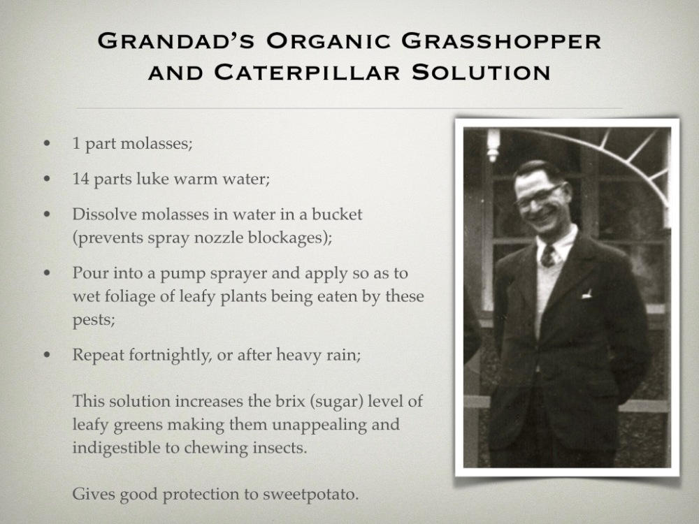 Grandad's molasses recipe