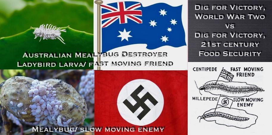 Mealybug/ Mealybug ladybird/ dig for victory