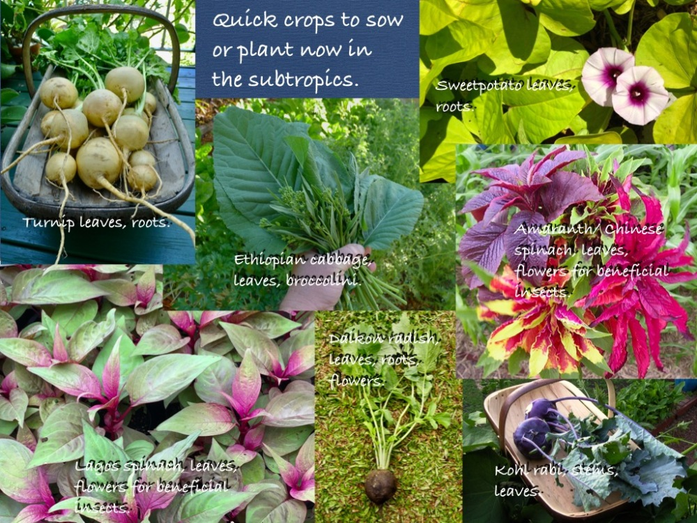 vegetables to sow now