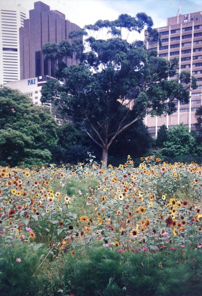Flower meadow State Library NSW
