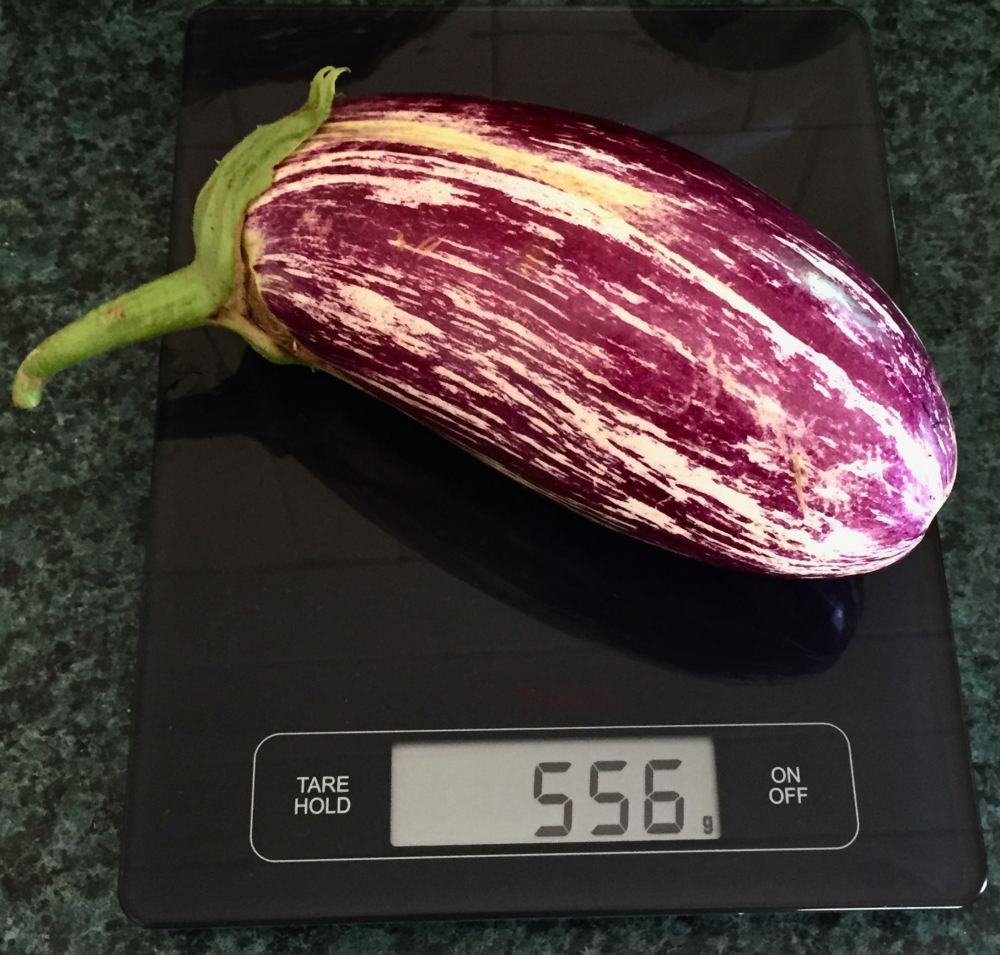 Listada Solanum eggplant