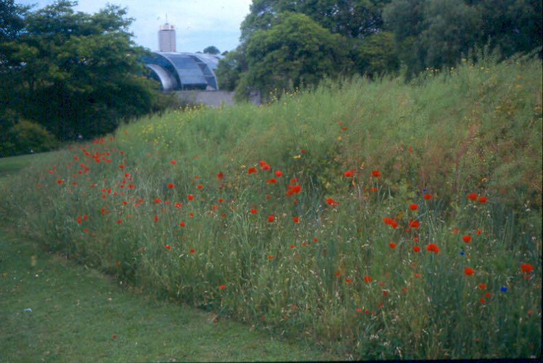 meadow garden - 1
