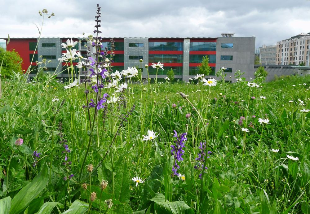 Meadow/ public housing/ Geneva - 3