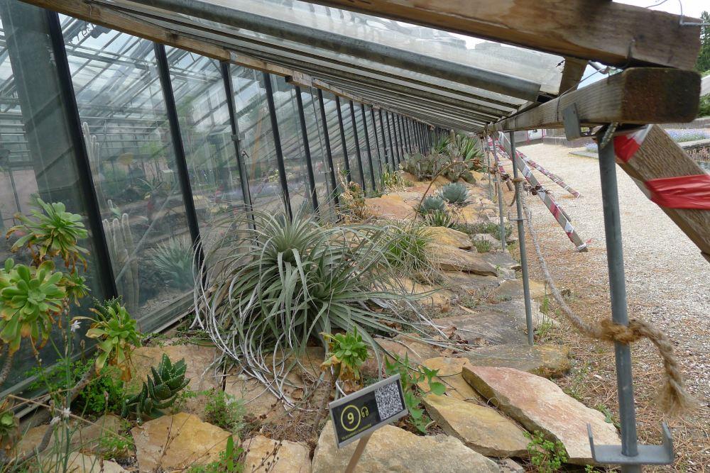 winter garden geneva