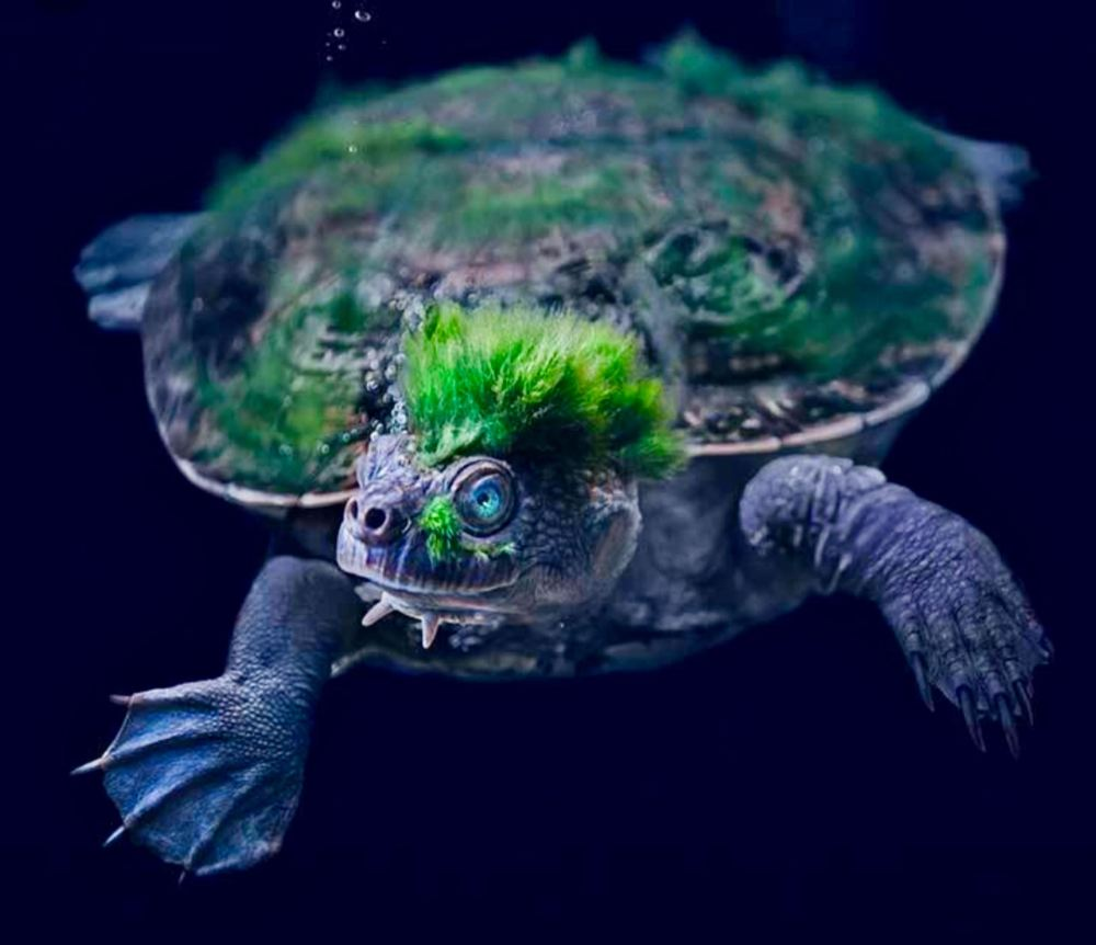 Mary River Turtle Reddit.com