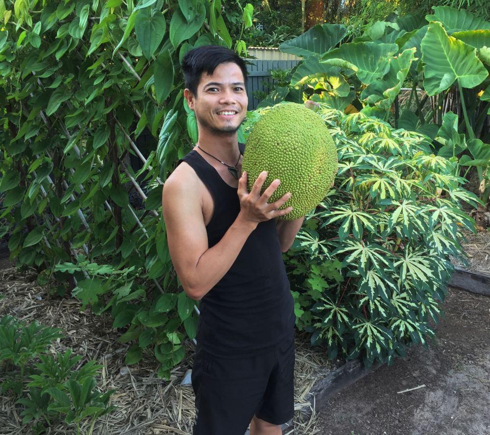 Thuan jackfruit, Artocarpus 10 kg - 1