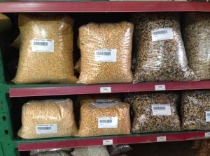 fodder corn, Zea mays sold at Produce Store