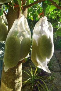 Jackfruit Artocarpus fruit bag